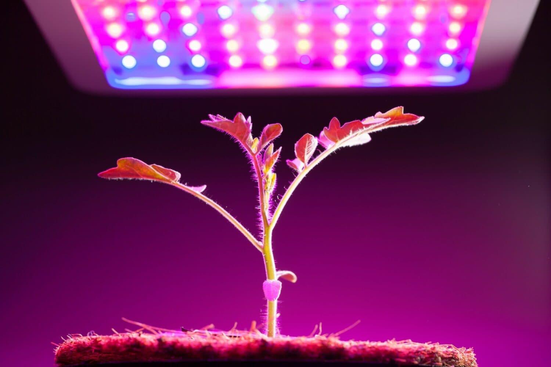 Il potente impatto della protezione delle future applicazioni di illuminazione LED, compresa una migliore crescita di animali, piante e alghe